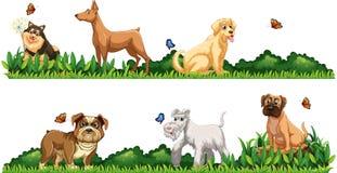 Genre différent de chiens dans le jardin Photo libre de droits