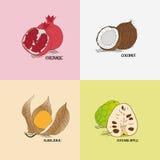 Genre différent de fruits exotiques pour le menu Illustration Libre de Droits