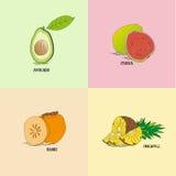Genre différent de fruits exotiques pour le menu de restaurants Illustration de Vecteur