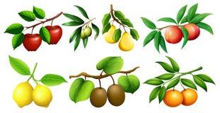 Genre différent de fruits sur des branches Illustration de Vecteur