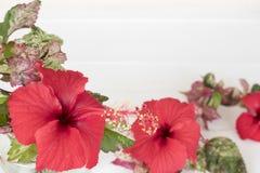 Gens du pays de fleurs de ketmie de décoration de l'Asie sur le blanc photos stock