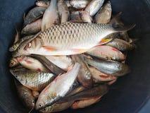 Gens du pays le Mekong de poissons photographie stock libre de droits