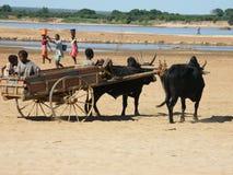 Gens malgaches indigènes Images libres de droits