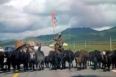 Gens tibétains avec des yaks Images stock
