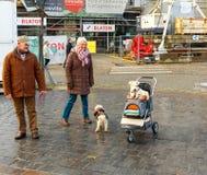 gent Um cão em um transporte de bebê Fotografia de Stock