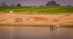 Gente birmana che lavora alle banche del fiume di Ayeyarwady, Myanmar Fotografia Stock Libera da Diritti