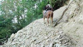 Gente con los caballos en la caza de la montaña almacen de metraje de vídeo