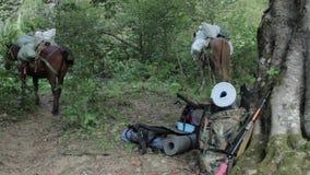 Gente con los caballos en la caza de la montaña metrajes