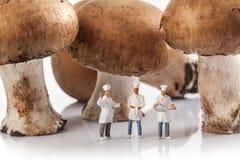 Gente de las miniaturas: cocineros delante de setas frescas fotografía de archivo
