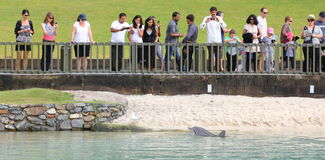 Gente de observación del delfín curioso Imagenes de archivo