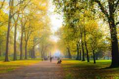 Gente debajo de una avenida de árboles en otoño fotos de archivo libres de regalías