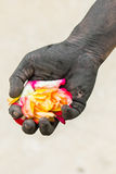 Gente di giardinaggio delle mani scure con le rose Fotografia Stock Libera da Diritti