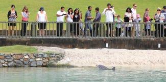 Gente di sorveglianza del delfino curioso Immagini Stock