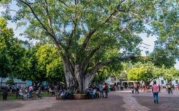 Gente en el parque Imagenes de archivo