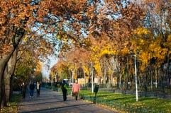 Gente en el parque del otoño imágenes de archivo libres de regalías