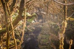 Gente en el puente de madera en bosque de la montaña con los árboles exóticos en Georgia Barranco de Martvili Barranco de Okatse Foto de archivo libre de regalías
