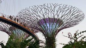 Gente en el Skyway y el Supertrees en el fondo en jardines por la bahía en Singapur almacen de video