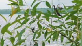 Gente en el yate en depósito Visión a través de las hojas verdes del árbol almacen de video