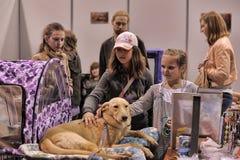 Gente en la distribución de la demostración de animales perdidos Fotografía de archivo