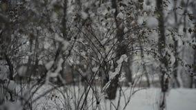 Gente en parque de la ciudad del invierno almacen de metraje de vídeo