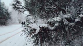 Gente joven contra la perspectiva de las ramas del abeto pulverizadas con nieve metrajes