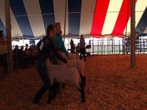 Gente joven que muestra sus animales del campo en una feria del condado metrajes
