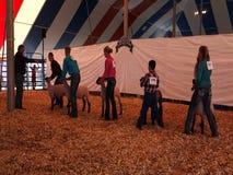 Gente joven que muestra sus animales del campo en una feria del condado almacen de video