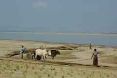 Gente local en los trabajos agrícolas Foto de archivo