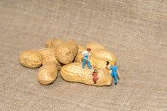 Gente miniatura che taglia i dadi a pezzi nocciola Arachidi della rottura della piccola gente Fotografia Stock Libera da Diritti