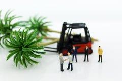 Gente miniatura: Gli uomini d'affari fanno gli accordi su silvicoltura L'uso di immagine per approfitta dell'albero, concetto di  immagini stock libere da diritti