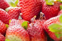 Gente minuscola - gli agricoltori che lavorano alla fragola sistemano Immagine Stock Libera da Diritti
