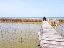 Gente o foto que toma turística y situación en el puente de madera que estira del bosque del mangle a la presa de bambú y del mar Fotografía de archivo