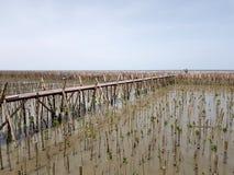 Gente o foto que toma turística y situación en el puente de madera que estira del bosque del mangle a la presa de bambú y del mar Foto de archivo libre de regalías