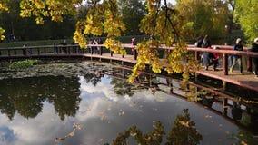 Gente Promenading en el lago en el parque en un día claro en otoño temprano almacen de metraje de vídeo