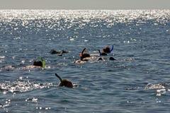 Gente que bucea en el Mar Rojo Imagen de archivo