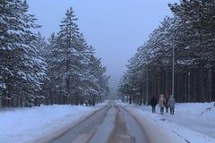 Gente que camina abajo de la calle en bosque conífero en DA nevosa Imágenes de archivo libres de regalías