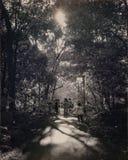 Gente que camina en bosque Imágenes de archivo libres de regalías