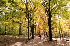 Gente que camina en bosque, caída en Países Bajos Fotos de archivo