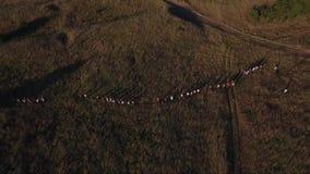 Gente que camina en campos rurales almacen de video