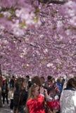 Gente que camina en un parque florido Imagen de archivo