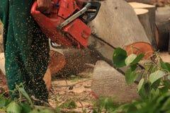 Gente que corta árboles Imágenes de archivo libres de regalías