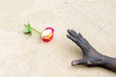 Gente que cultiva un huerto de las manos oscuras con las rosas Imagen de archivo libre de regalías