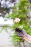 Gente que cultiva un huerto de las manos oscuras con las rosas Imágenes de archivo libres de regalías