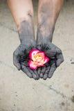 Gente que cultiva un huerto de las manos oscuras con las rosas Imagen de archivo