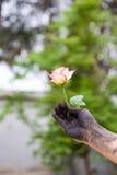 Gente que cultiva un huerto de las manos oscuras con las rosas Fotografía de archivo libre de regalías