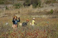 Gente que lleva la ropa tradicional que cosecha las pimientas de chiles rojos imagen de archivo libre de regalías