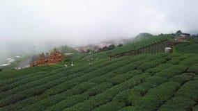 Gente que recolecta las hojas de té de Oolong en la plantación en el área de Alishan, Taiwán Visión aérea en tiempo nebuloso metrajes