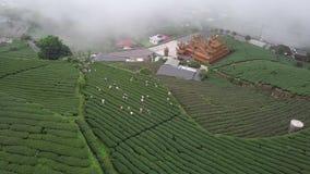 Gente que recolecta las hojas de té de Oolong en la plantación en el área de Alishan, Taiwán Visión aérea en tiempo de niebla almacen de video