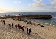 Gente que se coloca cerca de la orilla, de los leones marinos de observación y de los sellos en la playa, San Diego, California,  Foto de archivo