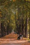 Gente que se sienta a lo largo del callejón en la distancia y de un banco adornado en el parque en el otoño fotografía de archivo libre de regalías